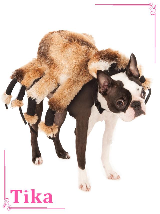 tika ティカ コスプレ 衣装 costume ペット ドッグウェア 蜘蛛 スパイダー 犬